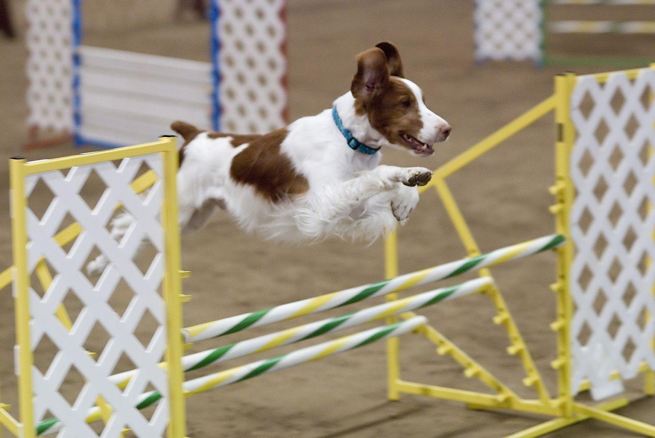 Olika hundsporter