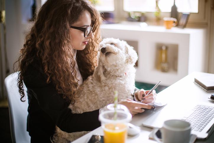 Hund mot jobbstress
